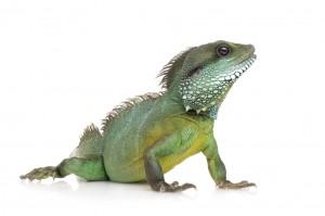 Reptiles - iStock_000004884355_Medium