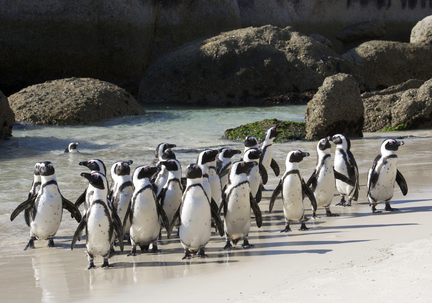 Penguin Group - iStock_000045395110_Medium